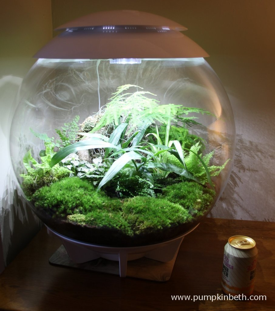 The BiOrbAir is pictured with a drinks can to help show the size of the terrarium.