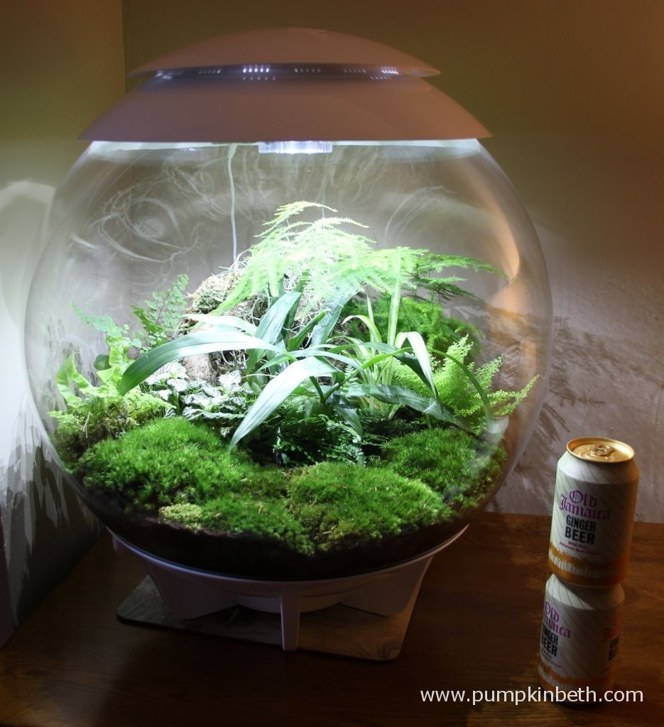 The BiOrbAir is pictured with two drinks cans to help show the size of the terrarium.