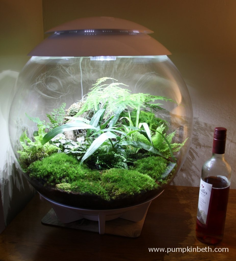 The BiOrbAir is pictured with a bottle of wine to show the size of the terrarium!