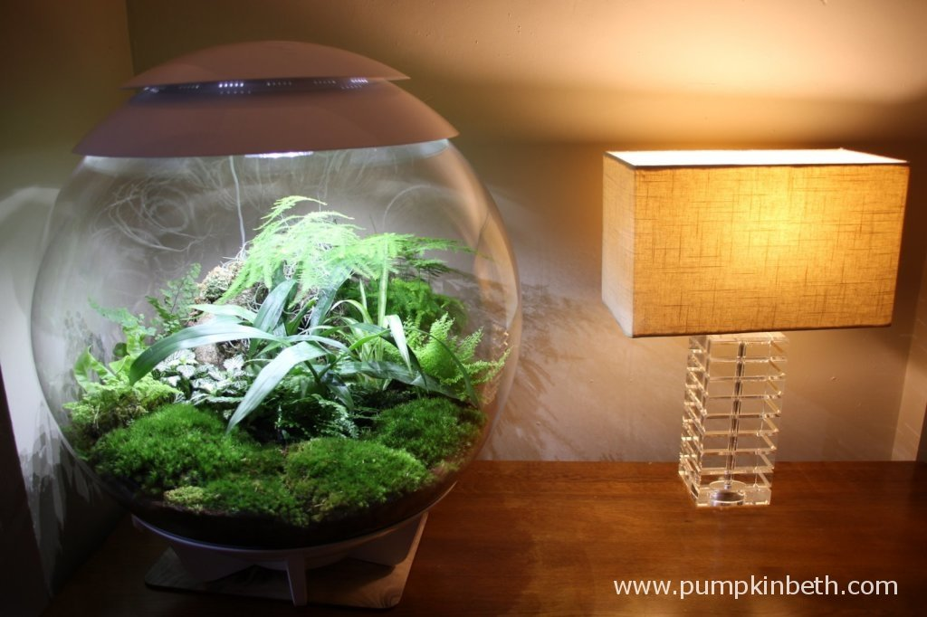 The BiOrbAir is pictured with a regular sized lamp to show the size of the terrarium!
