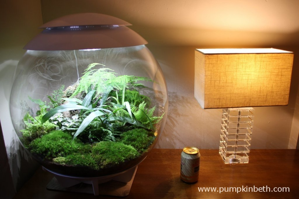 The BiOrbAir is pictured with a regular sized lamp and a drinks can to show the size of the terrarium!