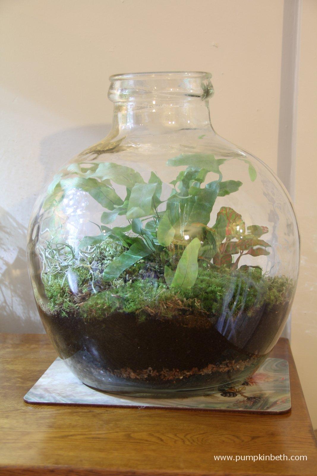 taking a look at terrariums pumpkin beth. Black Bedroom Furniture Sets. Home Design Ideas