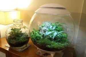 Taking a Look at Terrariums