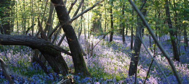 Wonderful Places To See Bluebells In Surrey Hampshire And Sussex Pumpkin Beth