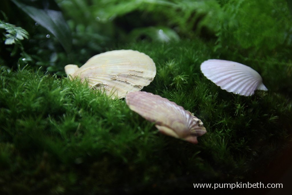 Shells can add a different feel to your terrarium or bottle garden