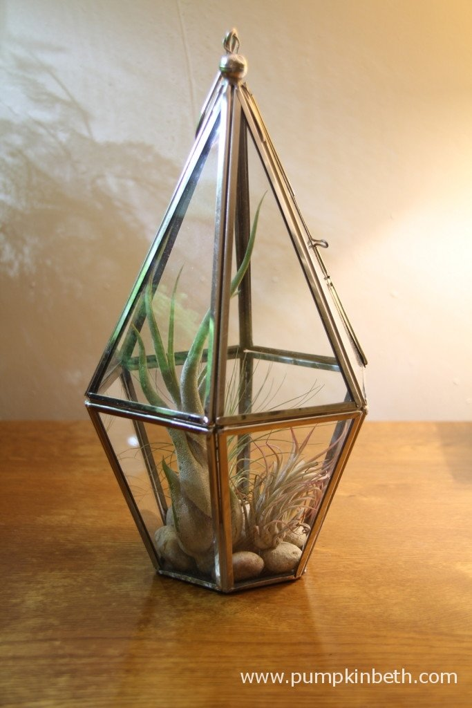 The attractive pebbles in this glass terrarium support the air plants and add to the overall appearance of the terrarium