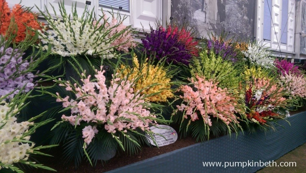 Pheasant Acre Plants Gold Medal winning exhibit at the 2015 RHS Chelsea Flower Show