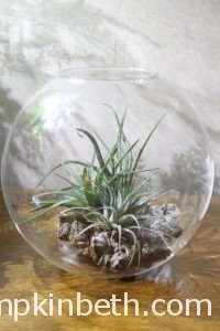 Using Decorative Features In Your Terrarium