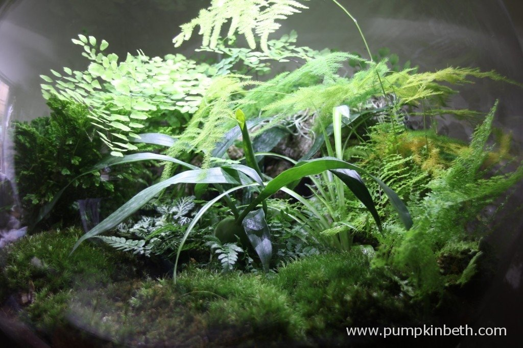 A close up of the plants in my BiOrbAir - photo taken on 2nd April 2015
