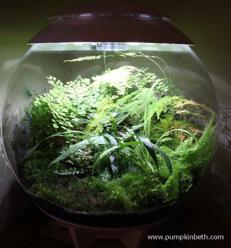 My BiOrbAir on 12th May 2015. Here you can see the moss at the front of the terrarium, I pour my rainwater over the moss towards the outside edge of the globe