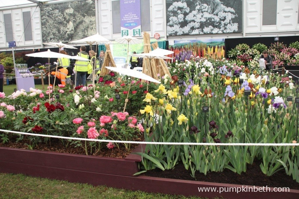 Kelways Plants Gold Medal winning exhibit at the 2015 RHS Chelsea Flower Show