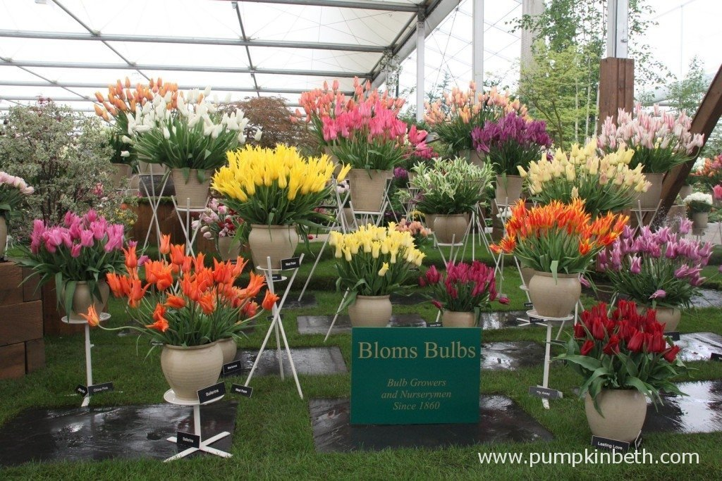 Bloms Bulbs Gold Medal winning display at the RHS Chelsea Flower Show 2015