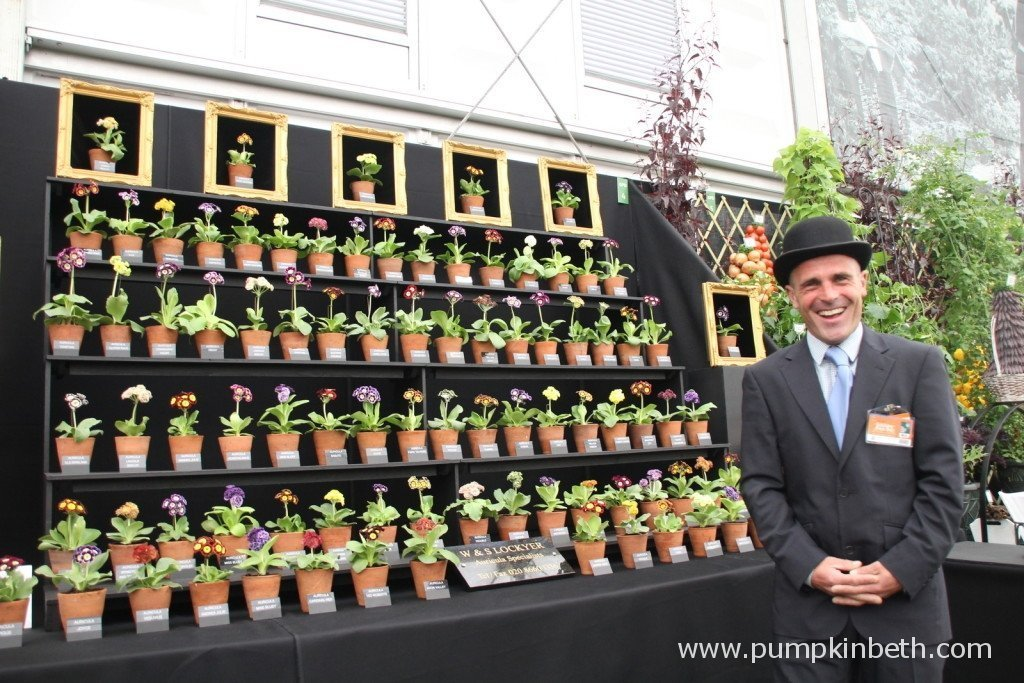 Auriculas with Simon Lockyer of W & S Lockyer