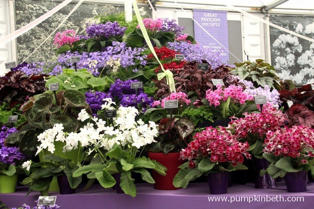The Gold Medal winning exhibit from Dibley at the 2015 RHS Chelsea Flower Show.