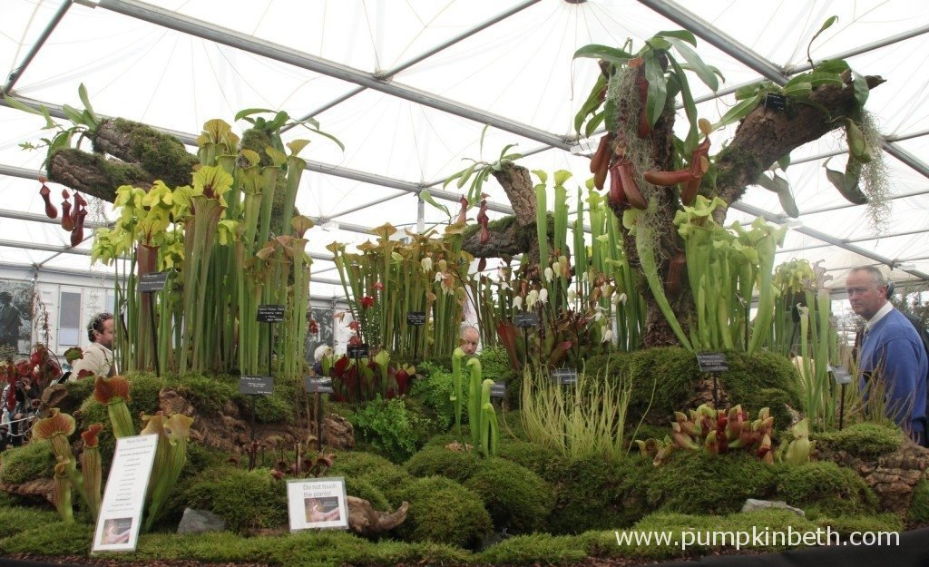 Hewitt-Cooper's Gold Medal winning carnivorous plant display at the 2015 RHS Chelsea Flower Show