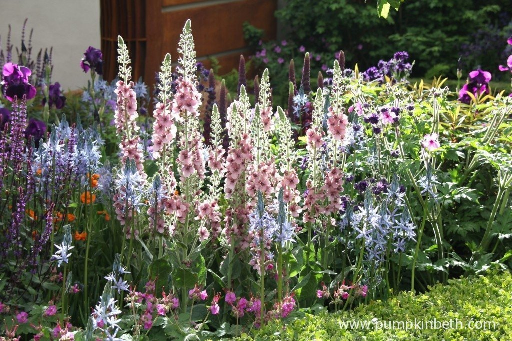 The herbaceous planting glistens, lit up by a brief moment of sunshine at the RHS Chelsea Flower Show.