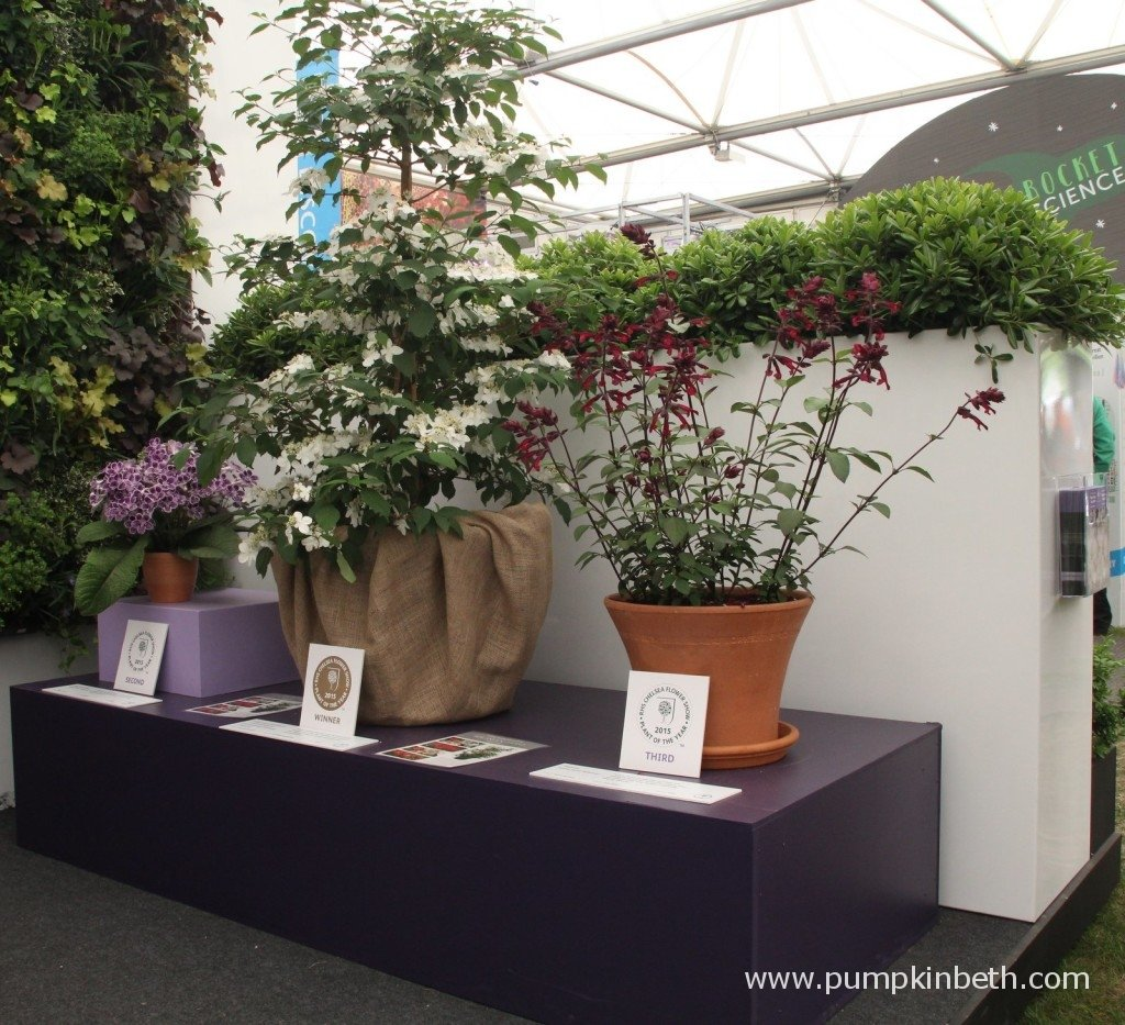 The RHS Chelsea Plant Of The Year Finalists 2015