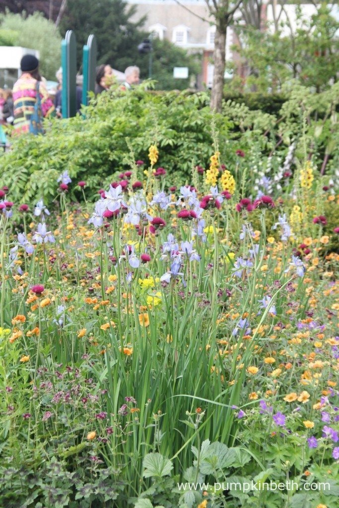 A close up of some of the colourful planting in the Home Base Garden - An Urban Retreat.