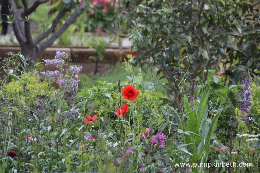 This pretty garden had a very warm and welcoming feel. I enjoyed the relaxed planting and natural feel of the garden.