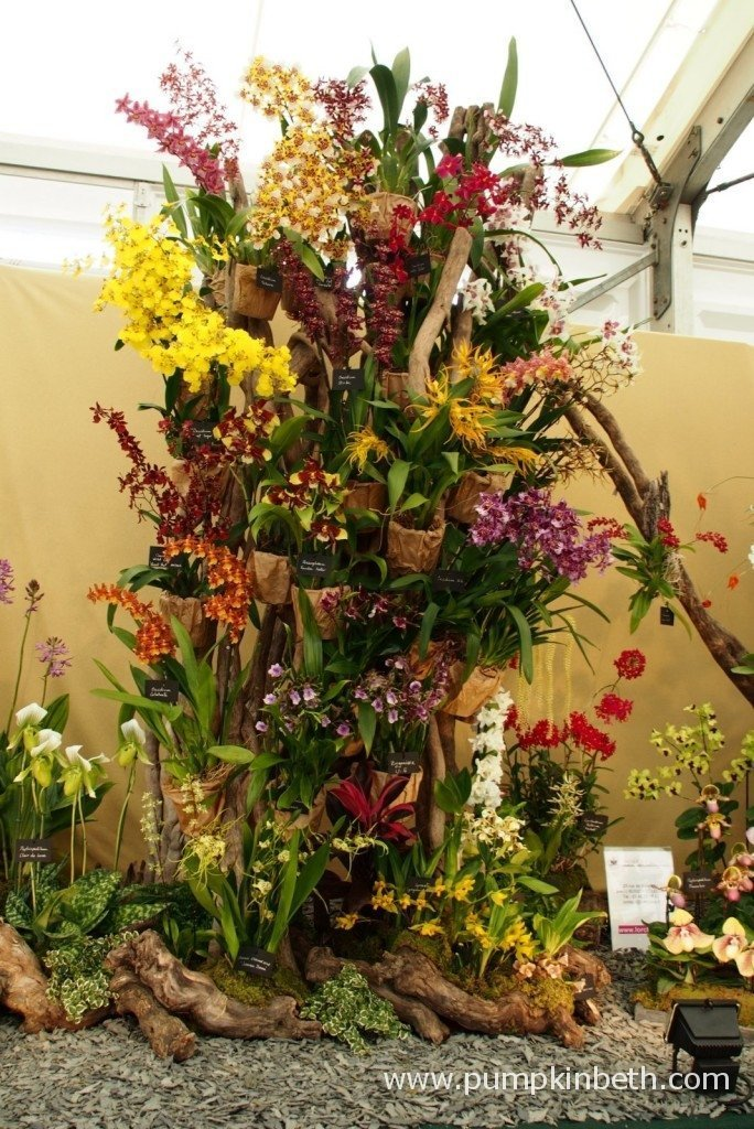 This wonderful orchid exhibit from Vacherot & Lecoufle was awarded a Gold Medal and was deemed to be the Best Exhibit in the Floral Marquee at the 2015 RHS Hampton Court Palace Flower Show.