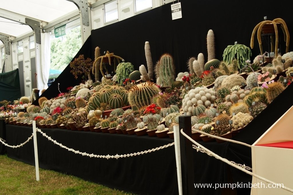This is the 2015 Gold Medal winning exhibit from Southfield Nurseries at the RHS Hampton Court Palace Flower Show. South Field Nurseries are the largest Cactus nursery in the UK, with over 750 varieties of cactus. Southfield Nurseries are based in Lincolnshire. You can visit Southfield Nurseries website by clicking here.
