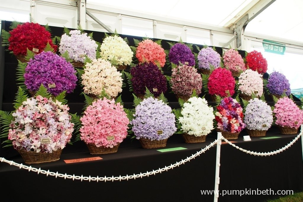 This is the 2015 Gold Medal winning display from Eagle Sweet Peas at the RHS Hampton Court Palace Flower Show. Eagle Sweet Peas are a family run nursery from Stowe-by-Chartley in Stafford.