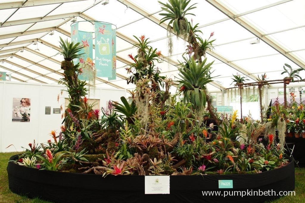This is the Gold Medal winning display of Bromeliads from Every Picture Tells A Story at the RHS Hampton Court Palace Flower Show. Every Picture Tells A Story are expert Bromeliad growers who hold a National Collection of Bromeliads. You can visit Every Picture Tells A Story's website by clicking here.