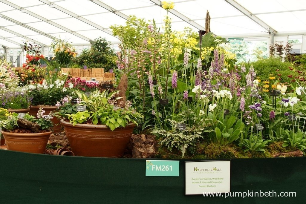 Here's the 2015 Gold Medal winning display from Harperley Hall Farm Nurseries in the Floral Marquee at the RHS Hampton Court Palace Flower Show. Harperley Hall Farm Nurseries are based in Durham, in the North East of England. Harperley Hall Farm Nurseries specialise in alpines, woodland plants, bog plants and more unusual perennials, including Anemone, Rhodohypoxis and some unusual Primula.