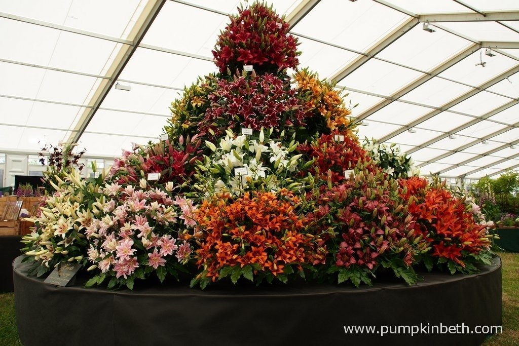 This is the 2015 Gold Medal winning display from Harts Nursery at the RHS Hampton Court Palace Flower Show. Harts nursery are a family run business, based in Cheshire. Harts are specialist Lily experts, they also supply spring and summer flowering bulbs.