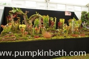 Gold Medal Nurseries At Hampton Court Flower Show