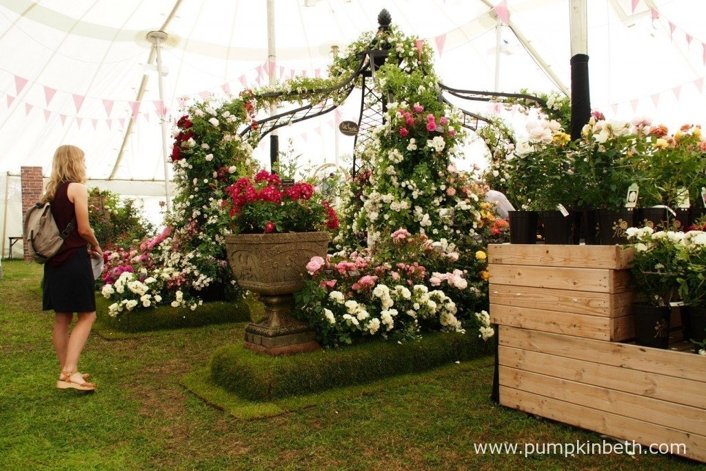 A beautiful rose arbour created by Peter Beales Roses in The Festival of Roses Marquee at the 2015 RHS Hampton Court Palace Flower Show.