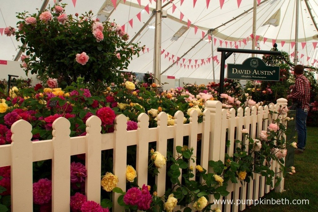 Inside The Festival of Roses Marquee at the 2015 RHS Hampton Court Palace Flower Show.