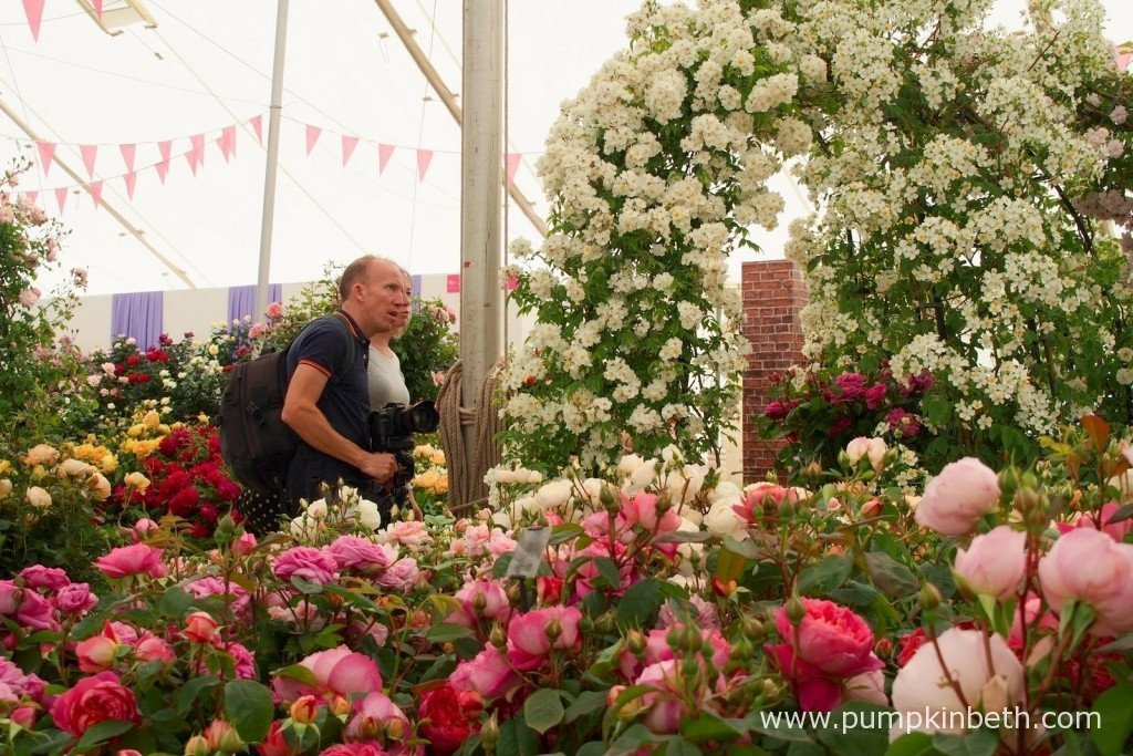 Visitors admiring the roses in The Festival of Roses Marquee at the 2015 RHS Hampton Court Palace Flower Show.
