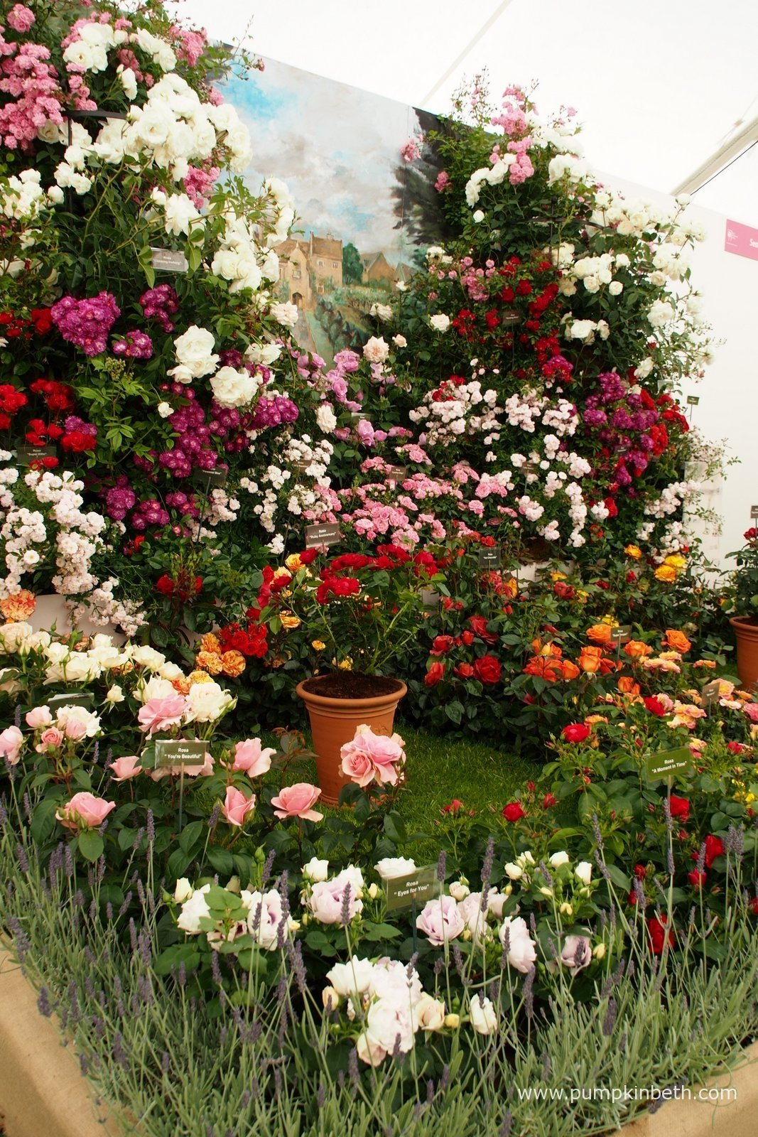 The festival of roses at the rhs hampton court palace - Hampton court flower show ...