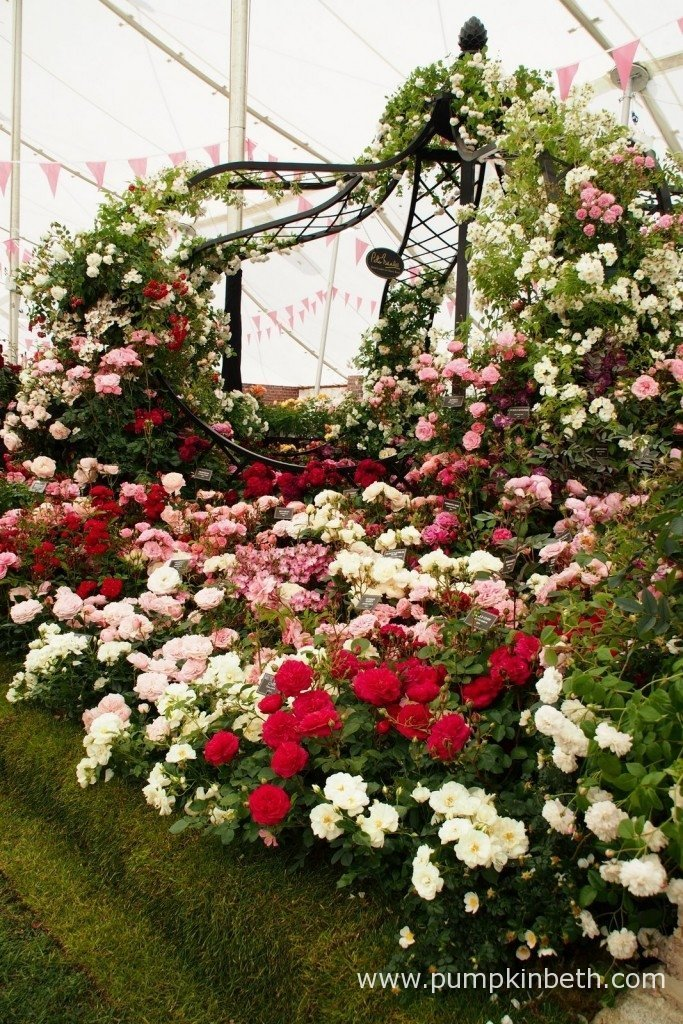A beautiful rose arbour created by Peter Beales Roses displayed inside The Festival of Roses Marquee at the 2015 RHS Hampton Court Palace Flower Show.