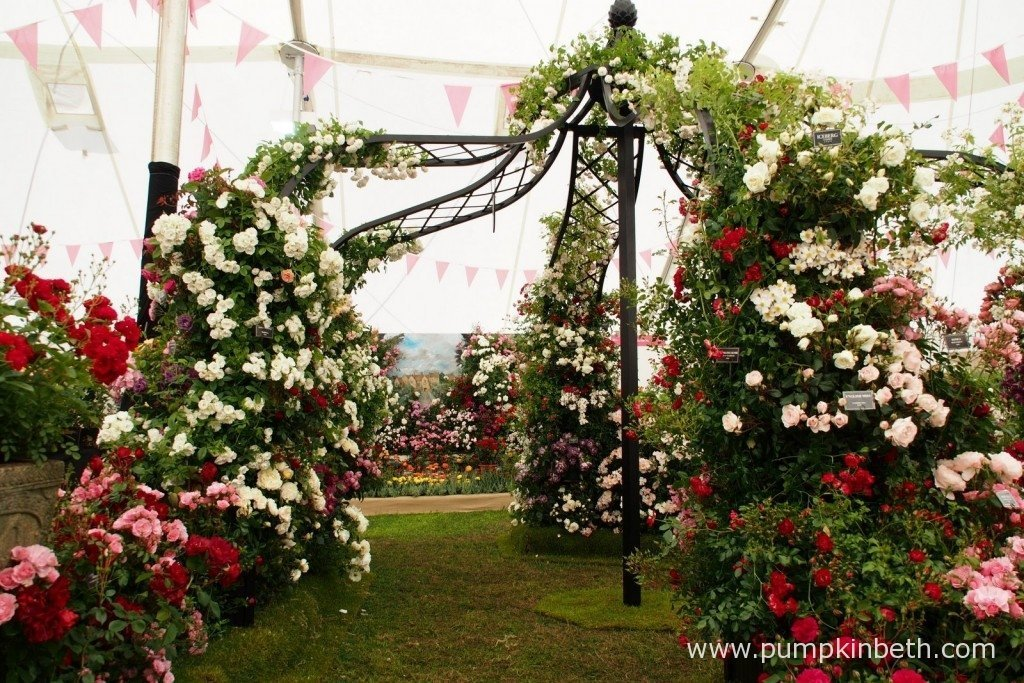 A beautiful rose arbour created by Peter Beales Roses inside The Festival of Roses Marquee at the 2015 RHS Hampton Court Palace Flower Show.