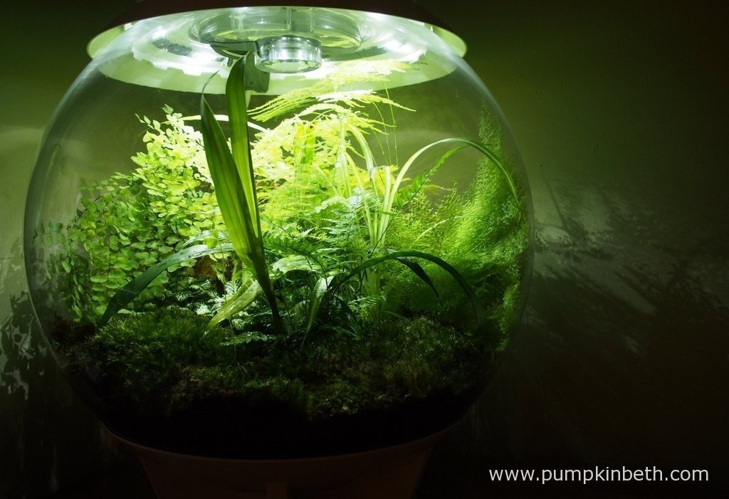 Another photograph of my BiOrbAir on 7th August 2015. I have found the BiOrbAir easy to look after and maintain and a real joy to have, I love this terrarium.