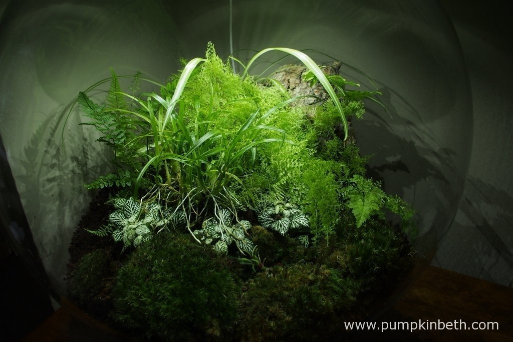 My BiOrbAir on 20th August 2015 after rearranging the terrarium plants and adding two miniature orchids to the terrarium.