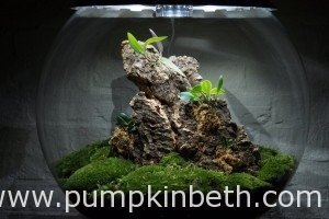 BiOrbAir Review – Growing Miniature Orchids in the BiOrbAir
