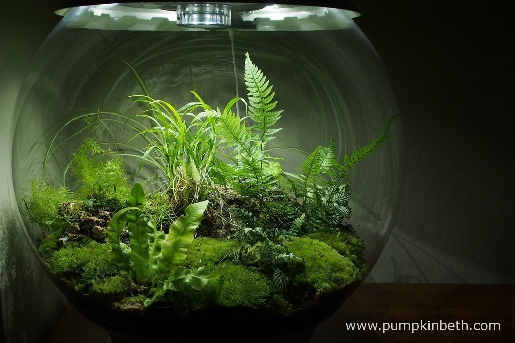 My BiOrbAir on 29th August 2015. I love this specialised, automated terrarium.