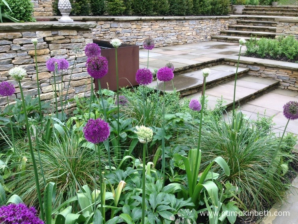 This garden was designed and built by NealeRichards Ltd. This photograph was taken by NealeRichards Ltd in May 2014.