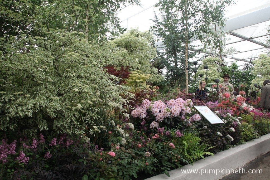 Hillier won their 70th Gold Medal at the 2015 RHS Chelsea Flower Show, here's a small section of their beautiful and extensive exhibit at Chelsea.