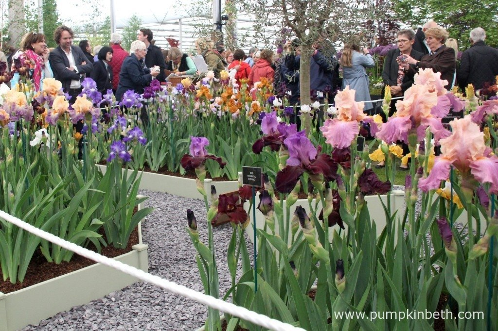 The Gold Medal winning display of Irises from Claire Austin Hardy Plants Ltd.