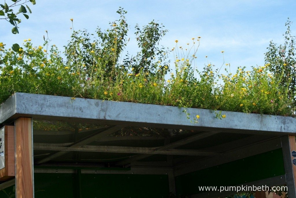Here's a close up of the green roof in full flower, on the bike store in the Community Street Garden. Green roofs can look very attractive they also provide valuable insulation to the building they are installed on, saving energy, green roofs also have a cooling effect, which is especially useful in an urban environment. Choosing the right plants for your green roof can help to benefit bees, butterflies and other insects.