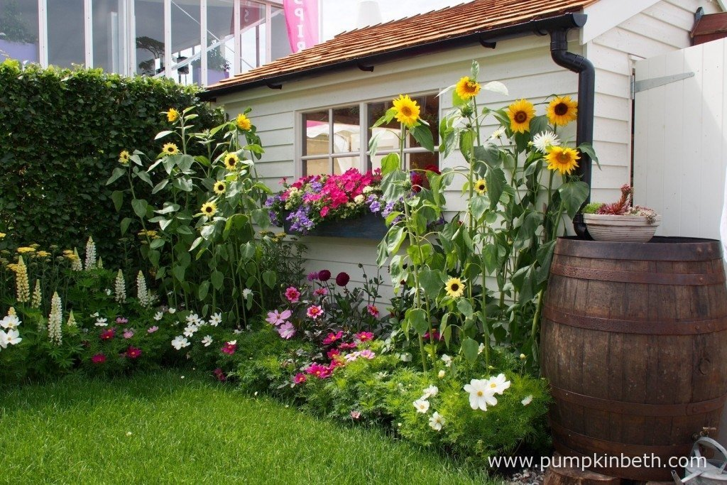 This painted shed was an attractive feature of the Just Retirement Garden. Accessing the shed is easy as there's no threshold or step to trip up over! The cheerful sunflowers, wooden barrel style water butt and the pretty window box only add to the charm of this attractive and useful, practical shed.