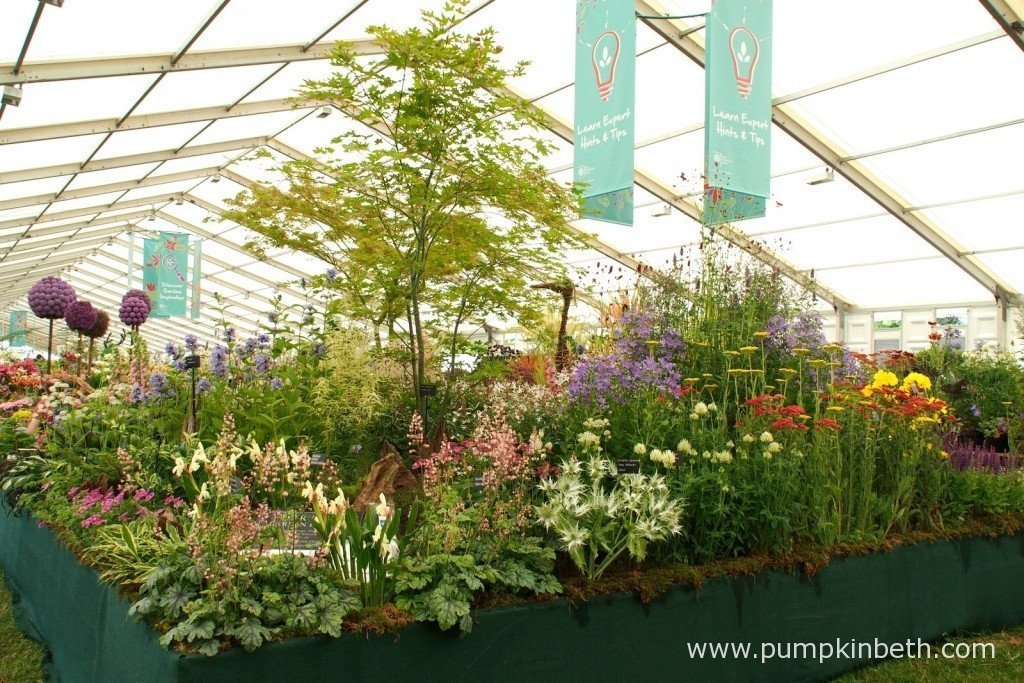 A lovely exhibit from Harveys Garden Plants, a family run nursery from Suffolk in England.
