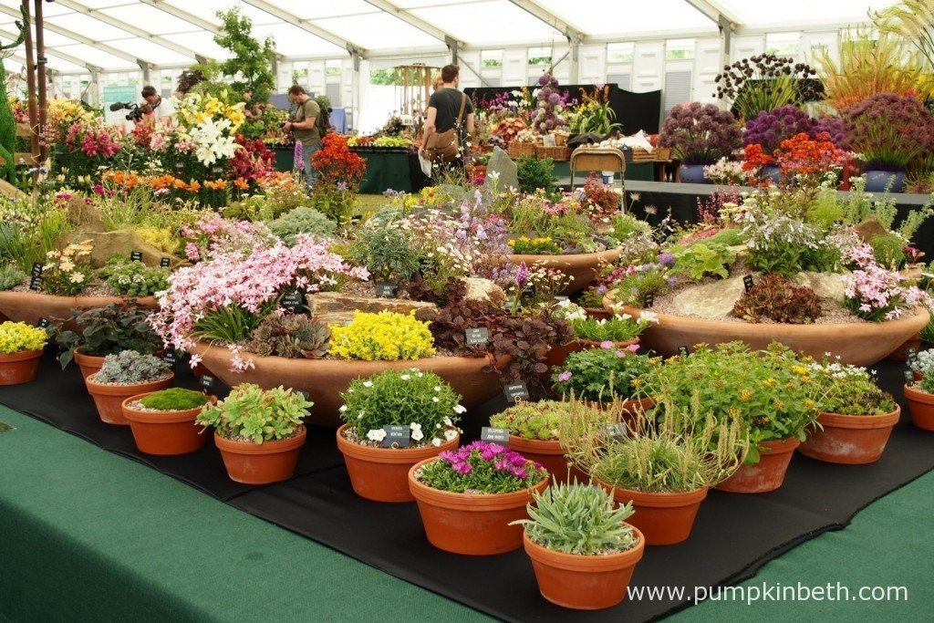 A lovely container display from D'Arcy & Everest, specialist growers of alpine plants from Cambridgeshire.