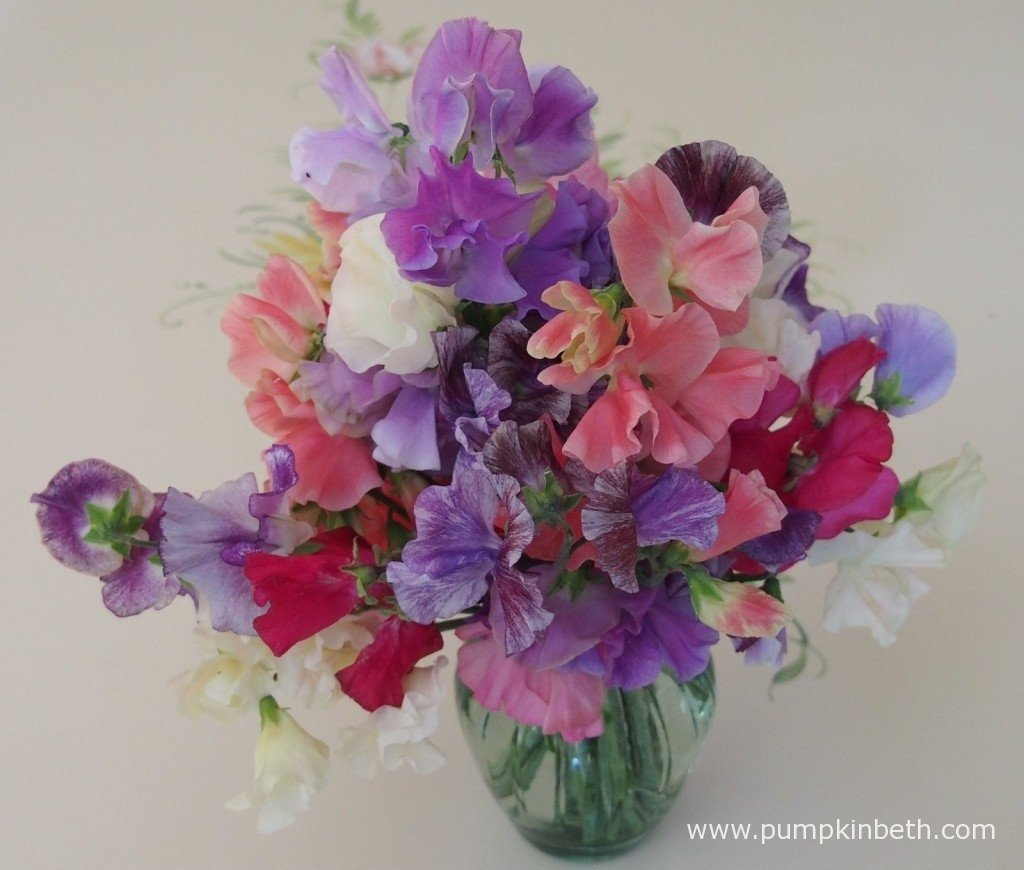 A vase of Sweet Peas collected during my 2015 Sweet Pea Trial.