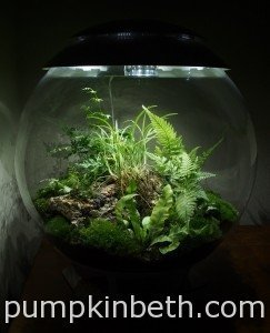 General Terrarium Maintenance and Plant Care for the BiOrbAir Terrarium