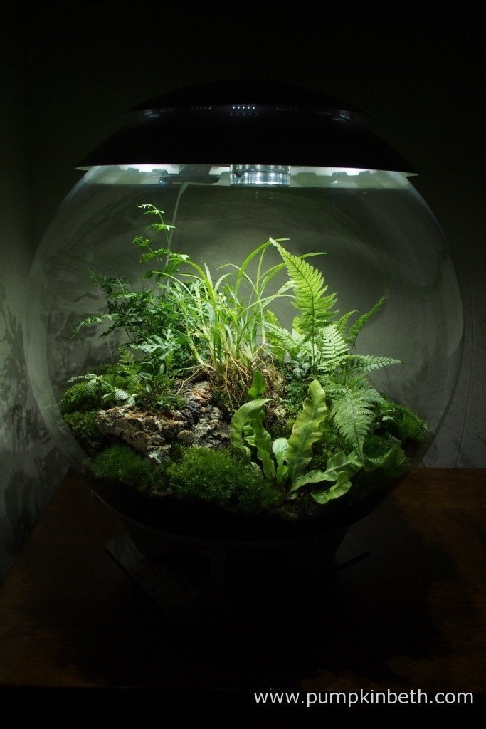 My BiOrbAIR terrarium is planted with ferns, miniature orchids, mosses and other plants that thrive in the high humidity created by this specialised terrarium.